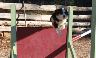 cours agility active-dog