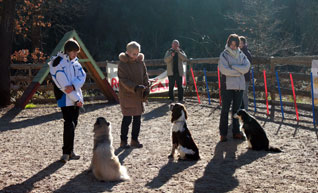 cours adultes active-dog